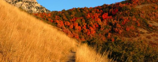 cropped-autumn_mountain_trail.jpg